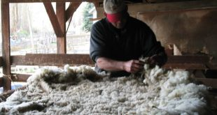 Washing Raw Wool: Get Ready for Some Serious Suds