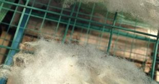 Navajo Churro Raw Wool 4 oz White/Cream Fleece Spinning Fiber | Etsy
