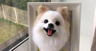 Neddle wool felt replication the portrait of a Pomeranian on a frame
